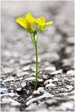 transformation flower rsz